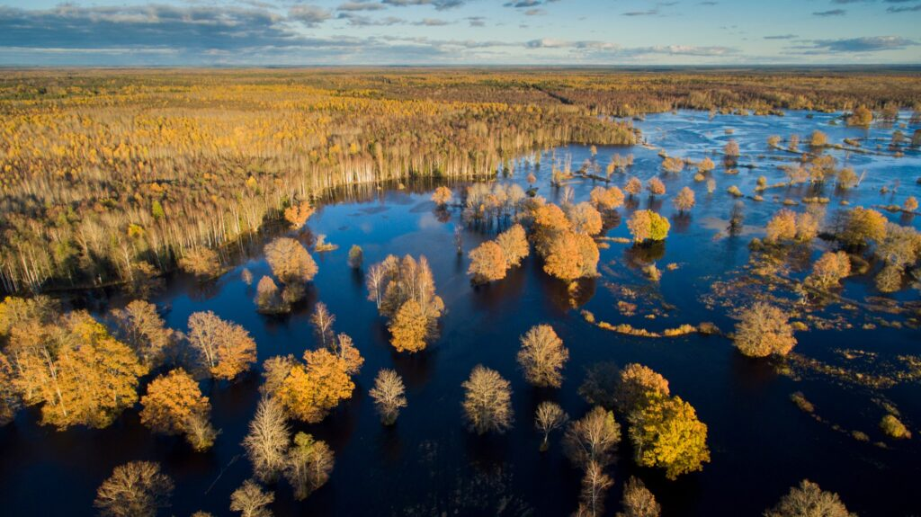 Soomaa National Park in Estonia.