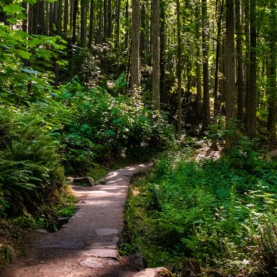 Spencer Butte hiking trail.