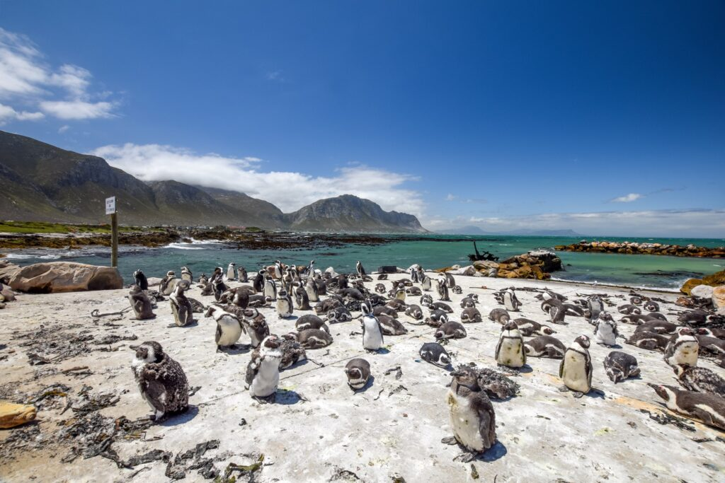 Stony Point Nature Reserve in South Africa.