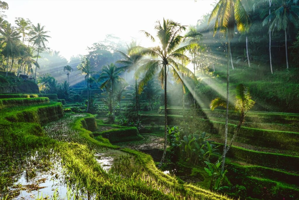 Sunny weather at rice terraces in Ubud.