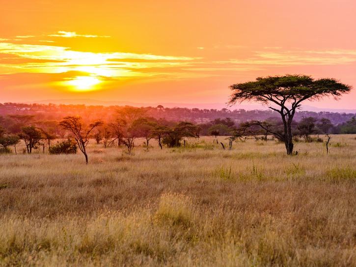 Sunset over the Serengeti.