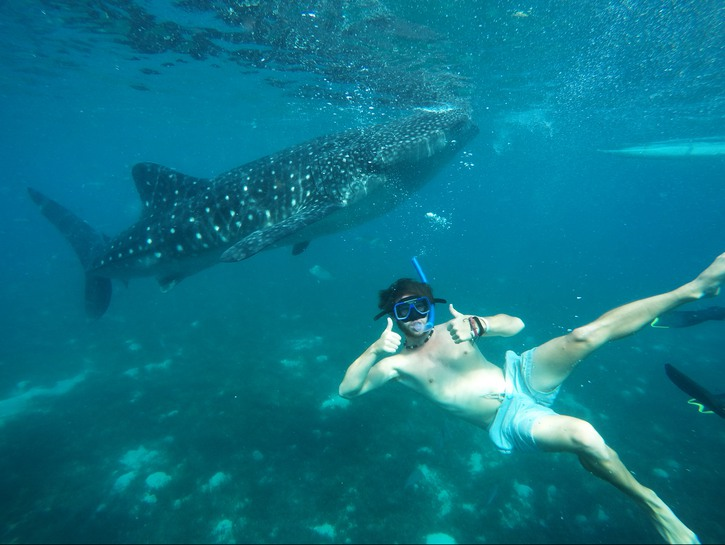 Swimming with whale sharks in Cebu, Philippines