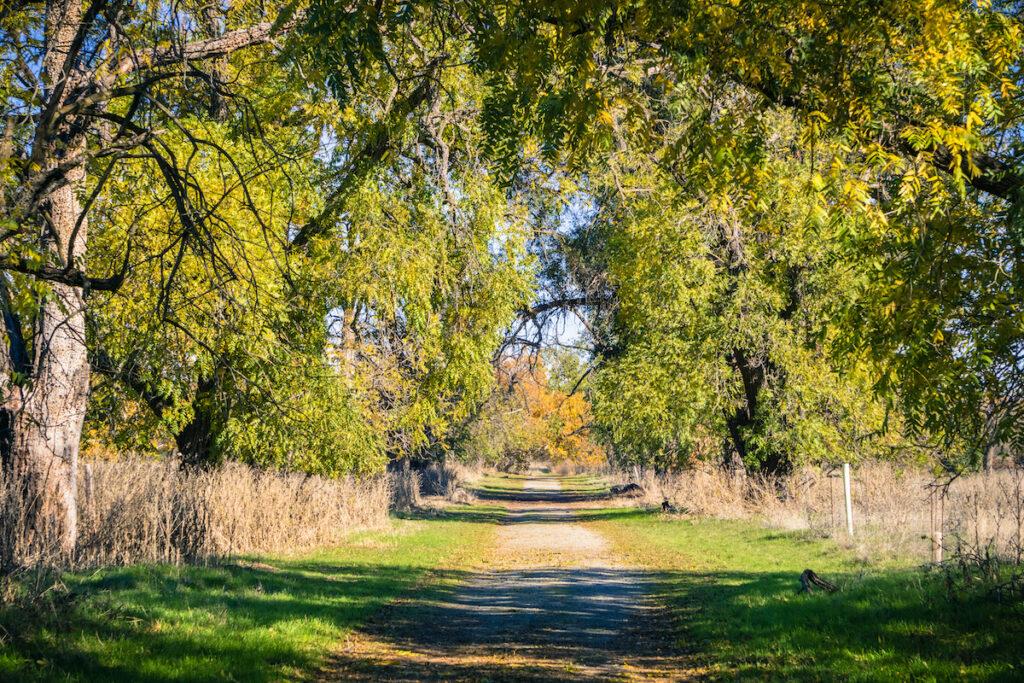 Sycamore Grove Park, Livermore, California.