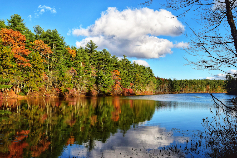 Tarbox Pond in Rhode Island's Big River State Management Area.