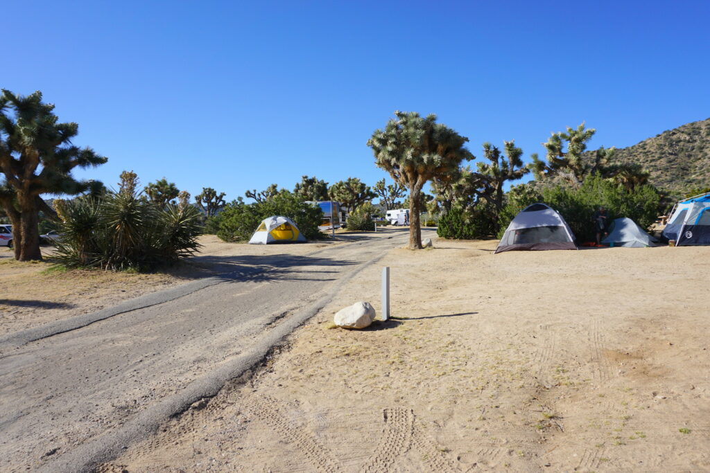 Tents set up in a campground at Joshua Tree National Park.