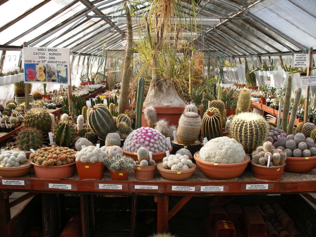 The Abbey Brook Cactus Nursery in the UK.