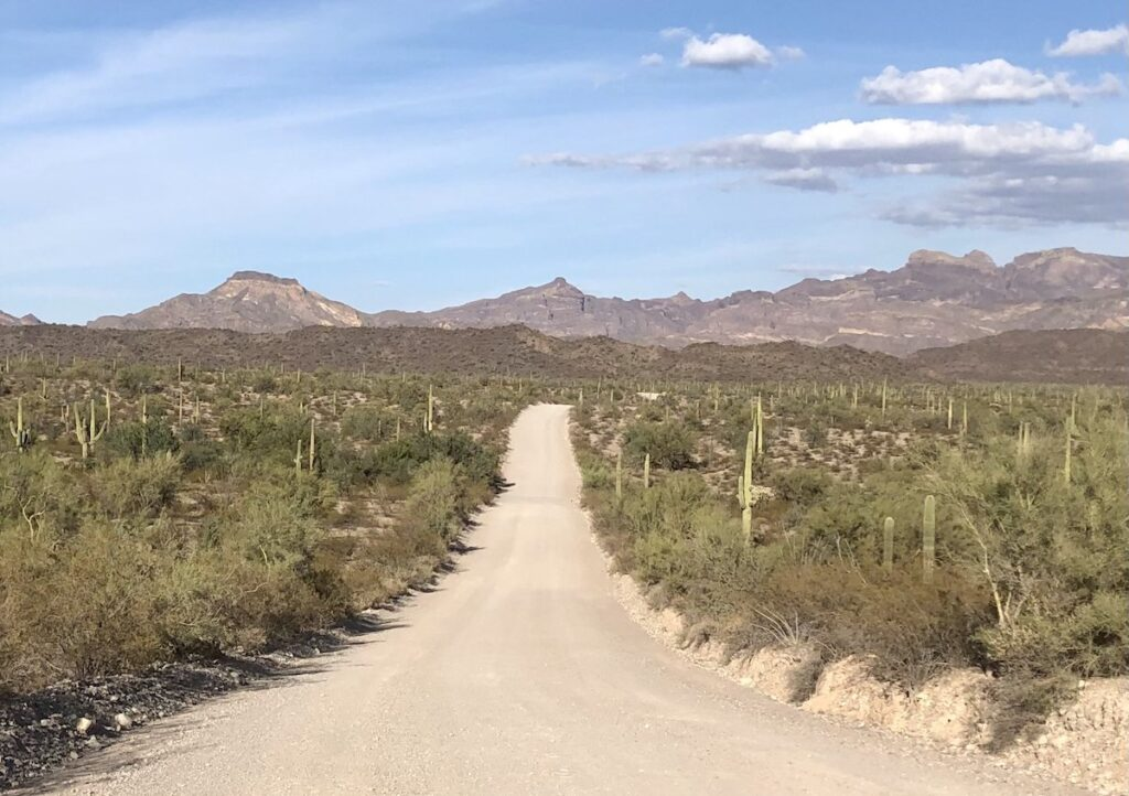 The Ajo Mountain Scenic Drive at Organ Pipe Cactus National Monument.