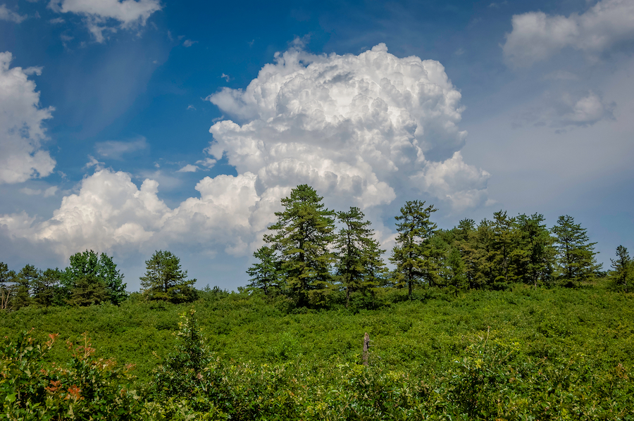 The Albany Pine Brush Preserve in New York.