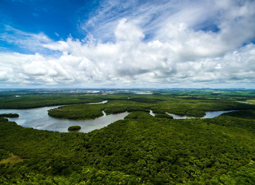 The Amazon Basin in Brazil.
