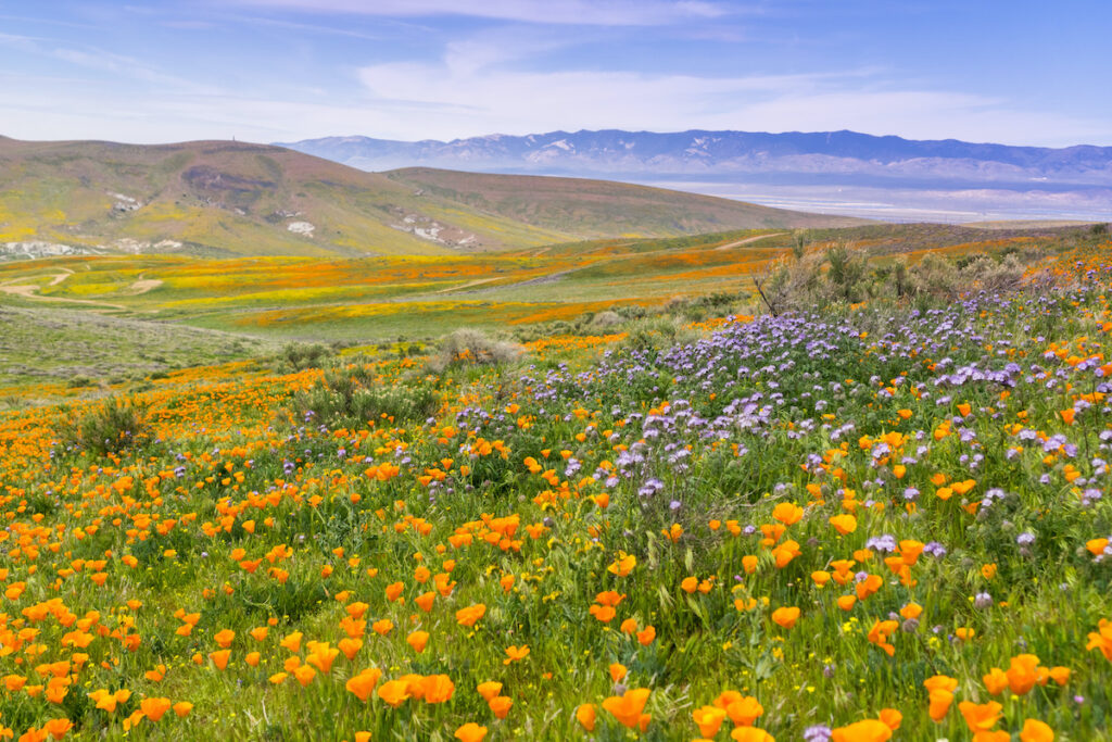 The Antelope Valley California Poppy Reserve.