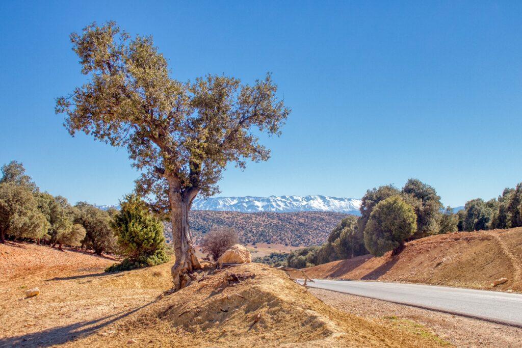 The Atlas Mountains in Morocco.