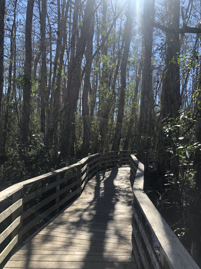 The Audubon Corkscrew Swamp Sanctuary in Florida.