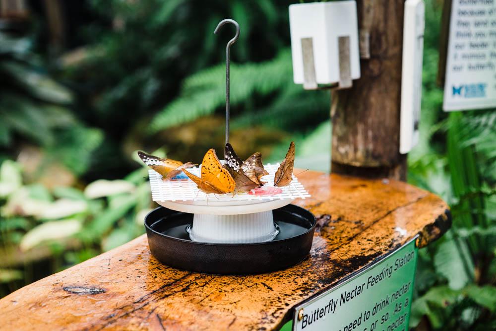 The Australian Butterfly Sanctuary in Kuranda.