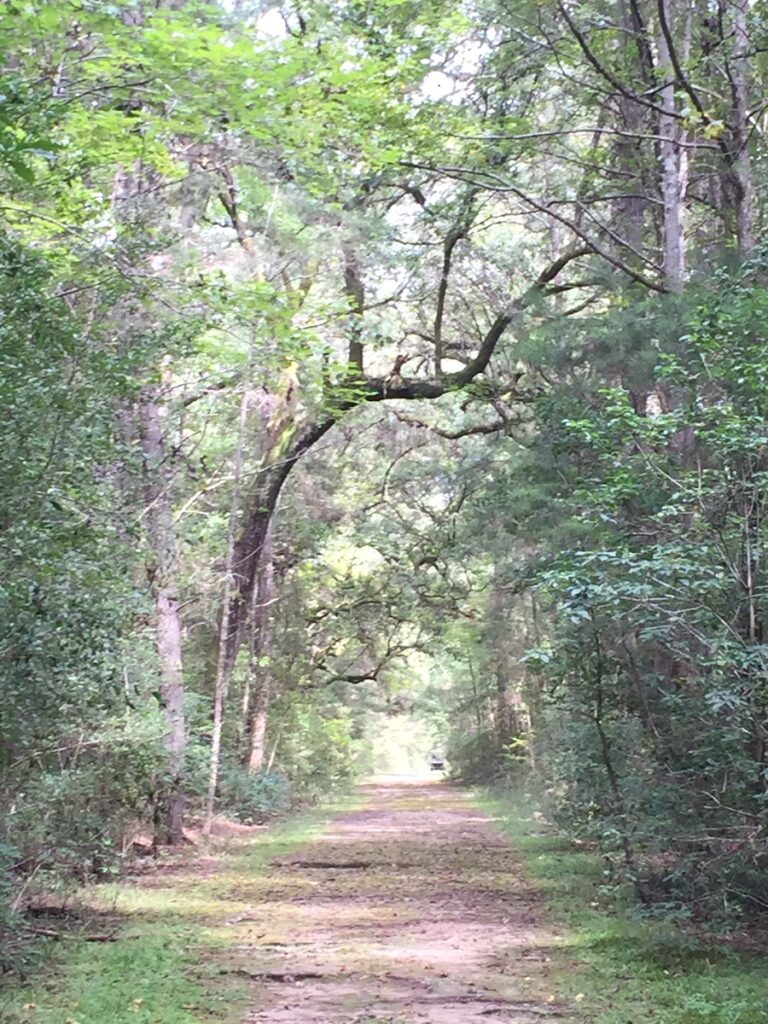 The Awendaw Passage through Francis Marion National Forest.