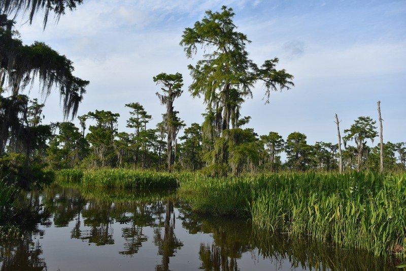 The Barataria Preserve in Marrero, Louisiana.