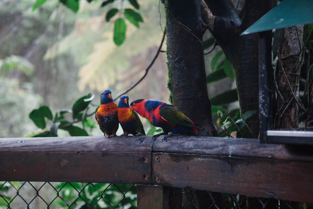 The Birdworld sanctuary in Kuranda.