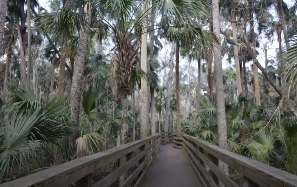 The Black Bear Wilderness Area Trail in Florida.