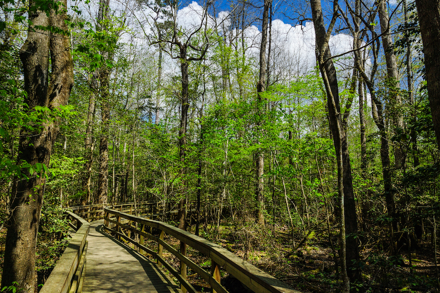 The Boardwalk Loop Trail in Congaree National Park.