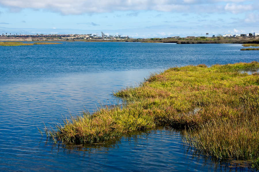 The Bolsa Chica Ecological Reserve in California.