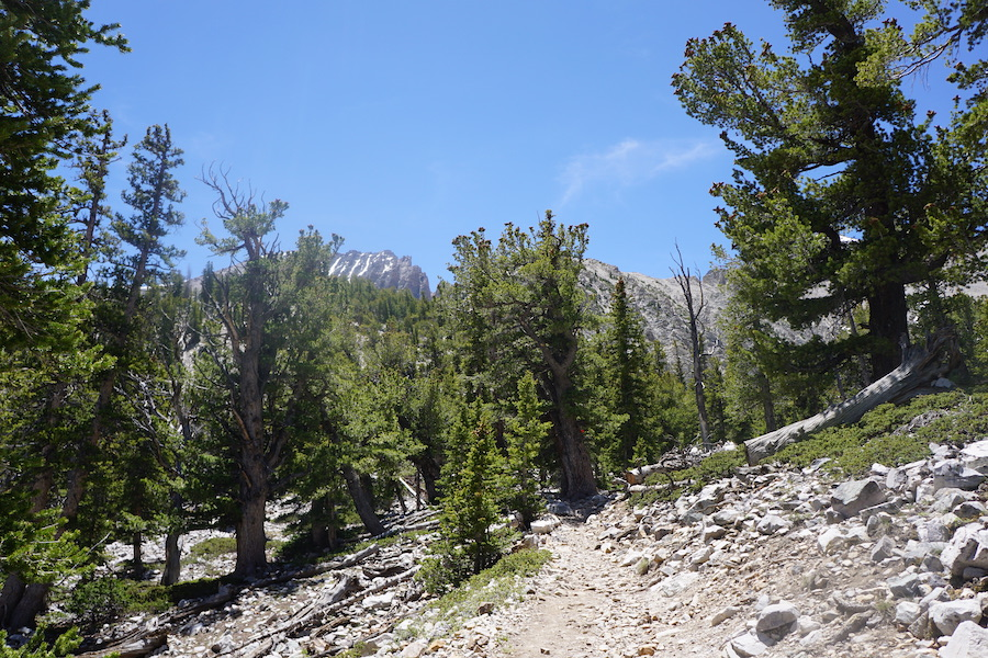 The Bristlecone and Glacier Trail in Great Basin National Park.