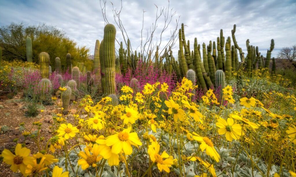 The Cactus Garden at the Arizona-Sonora Desert Museum.