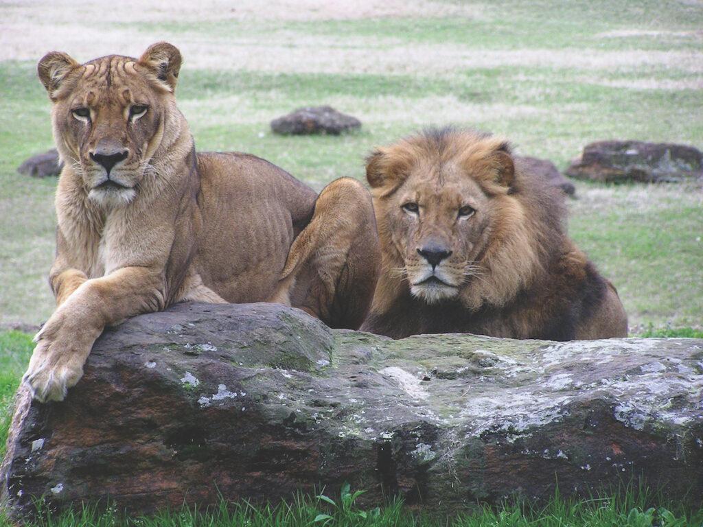 The Caldwell Zoo in Tyler, Texas.