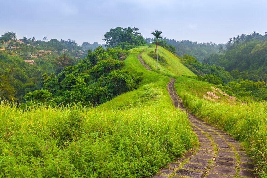 The Campuhan Ridge path in Ubud.