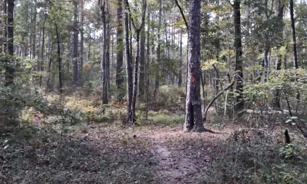 The Caroline Dormon Trail in Kisatchie National Forest.