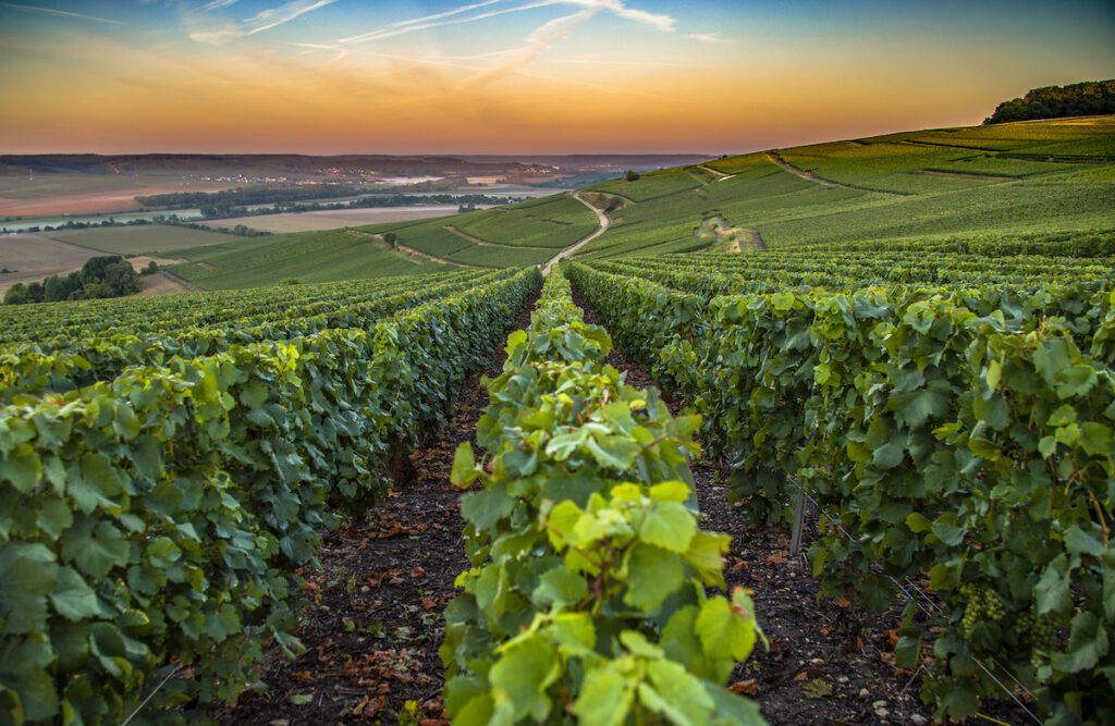 The Champagne wine region of France.