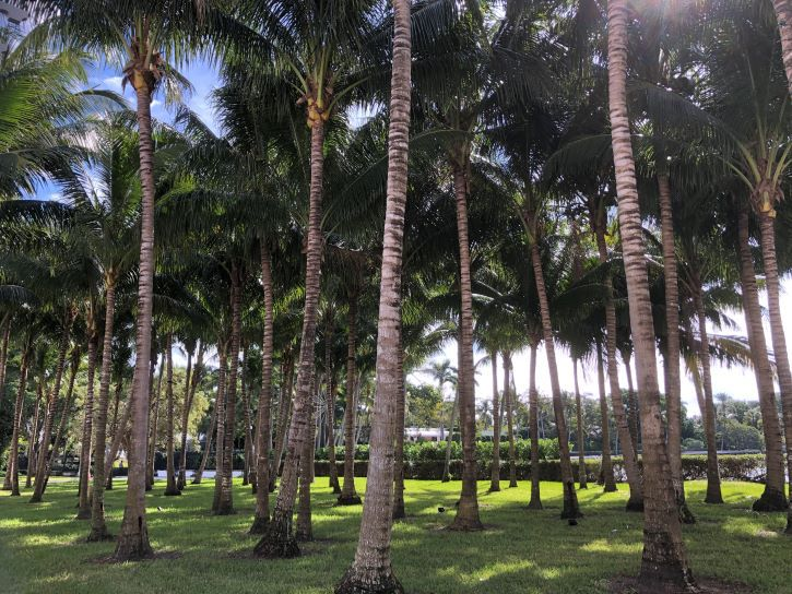 The cocanut grove at the Flagler Museum in Florida.