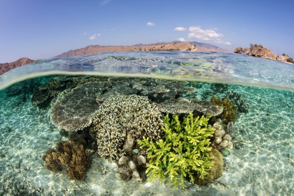 The Coral Triangle in Komodo National Park.