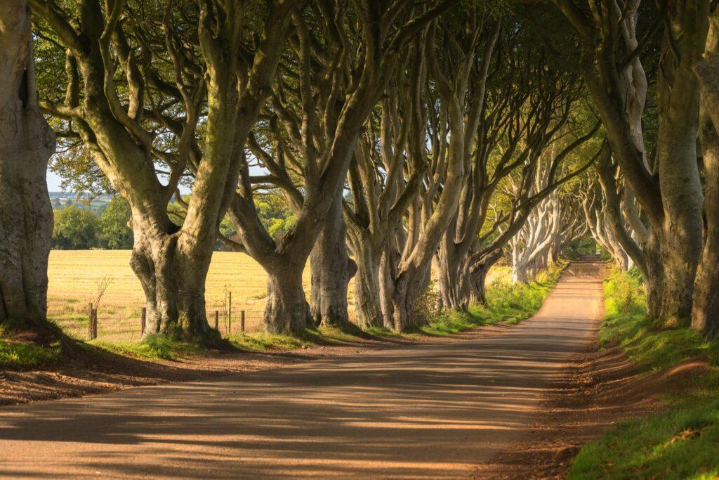 The Dark Hedges in Northern Ireland.