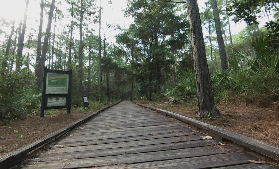 The Dauphin Island Audubon Bird Sanctuary in Alabama.