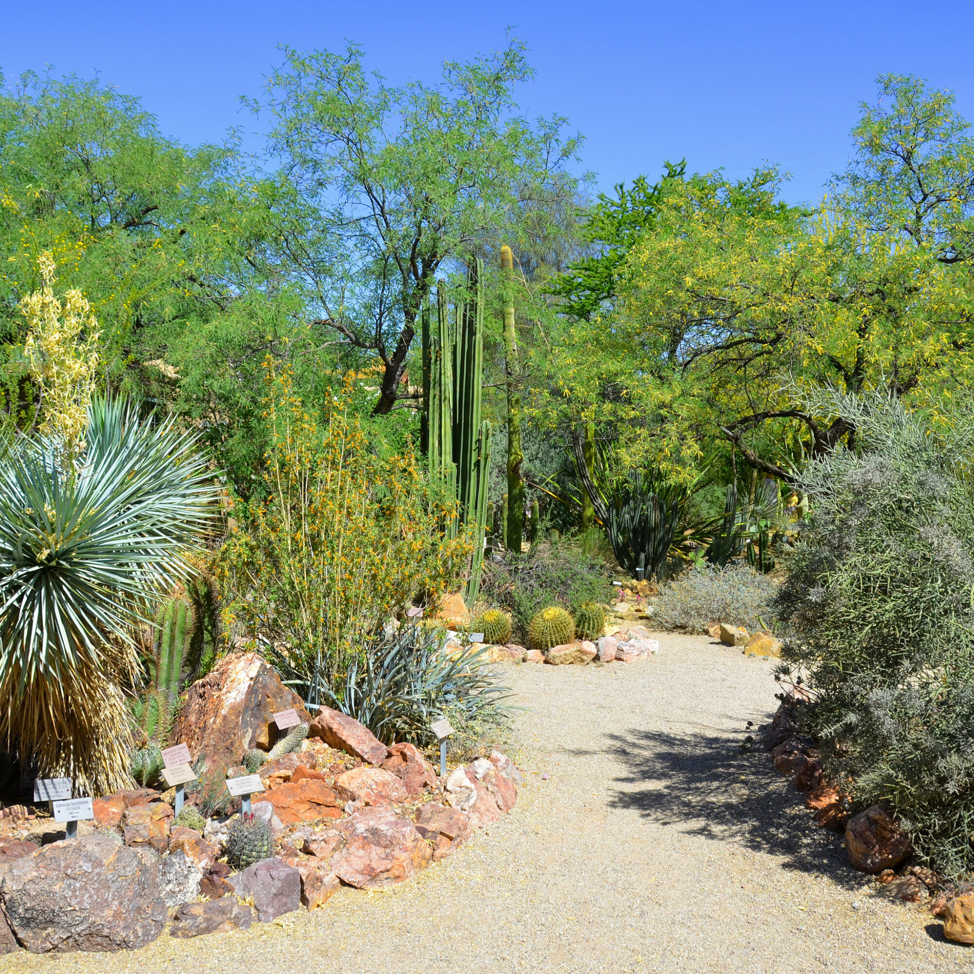 The Desert Botanical Garden in Phoenix, Arizona.