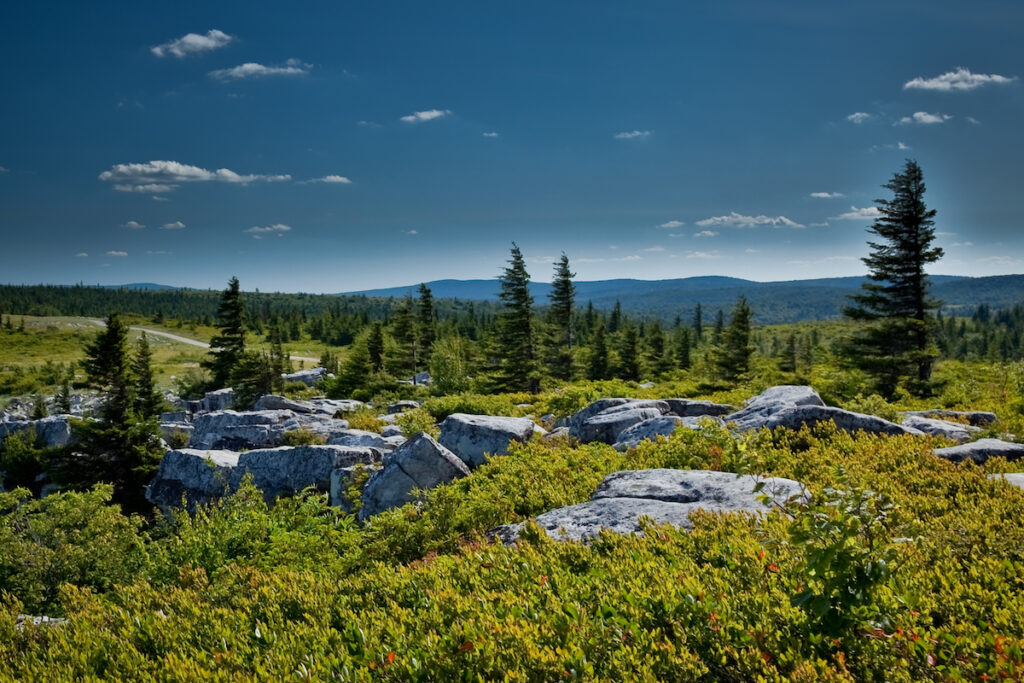 The Dolly Sods Wilderness in West Virginia.