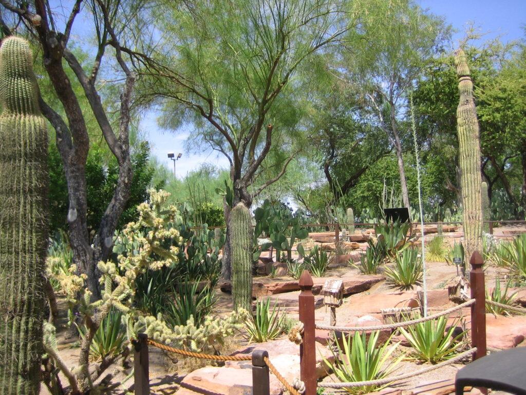 The Ethel M Chocolates' Botanical Cactus Garden.