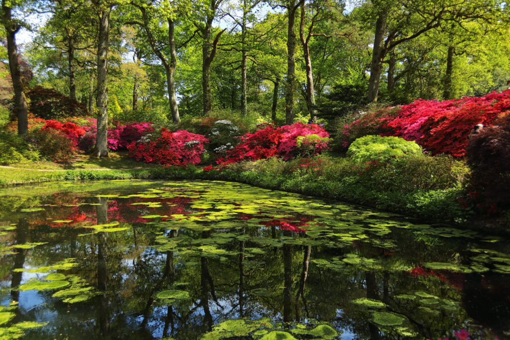 The Exbury Gardens in the New Forest.