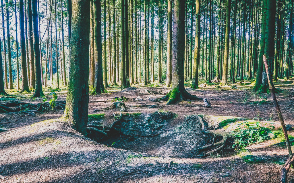 The forest in Bastogne, Belgium.