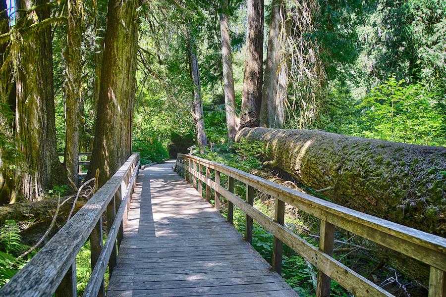 The Grove of the Patriarchs Trail near Mount Rainier.