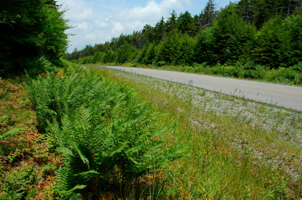 The Highland Scenic Route through West Virginia.