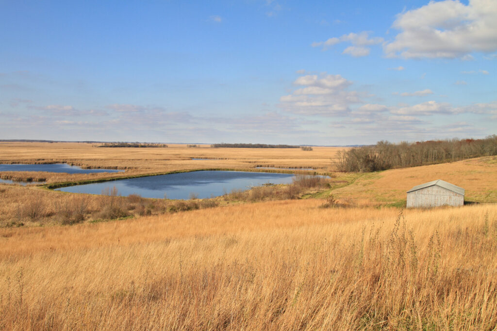 The Horicon National Wildlife Refuge in Wisconsin.