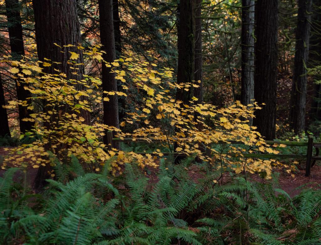 The Hoyt Arboretum in Portland, Oregon.