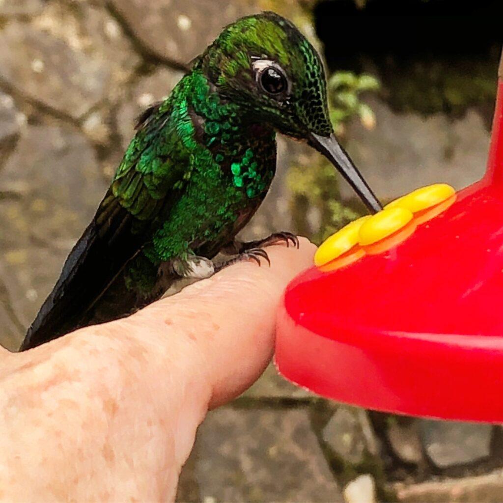 The hummingbird park in Selvatura, Costa Rica.