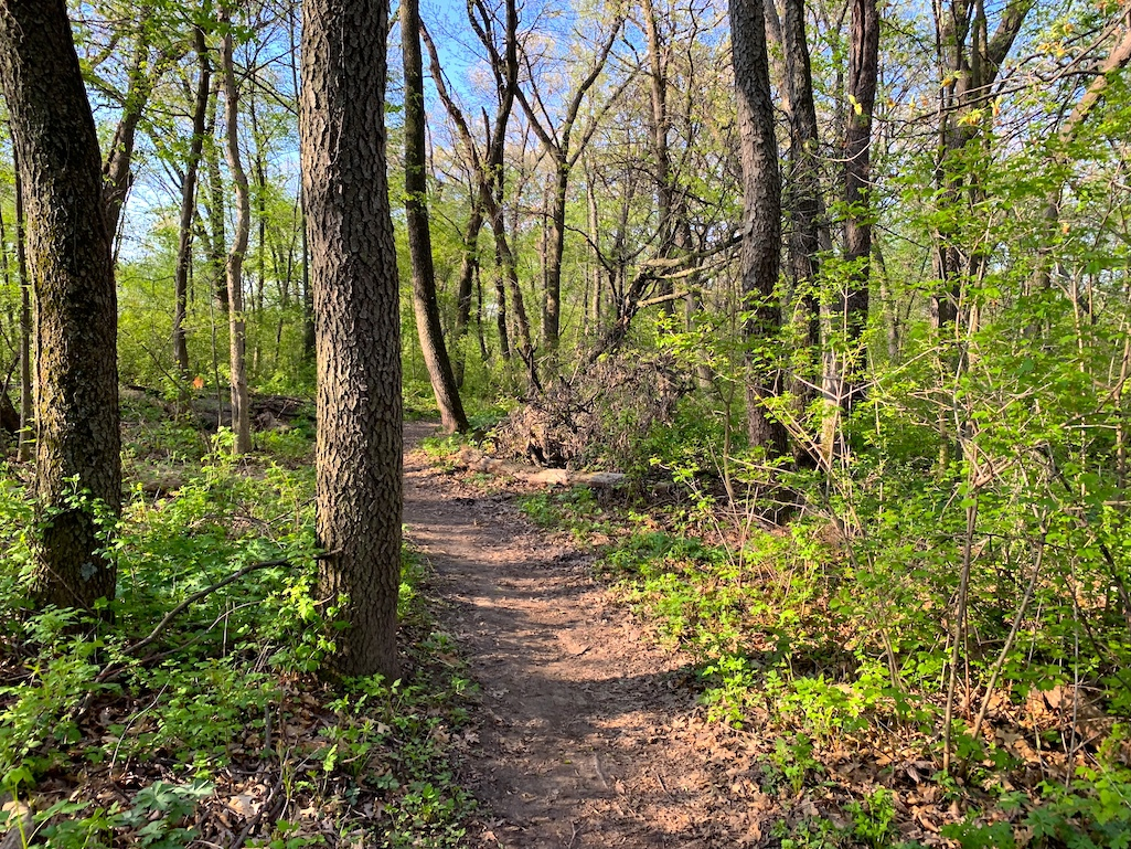 The Ice Age Trail in Madison, Wisconsin.