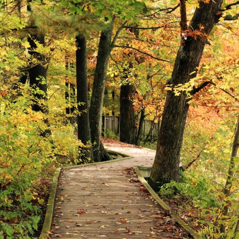 The Ice Age Trail in Wisconsin during the fall.
