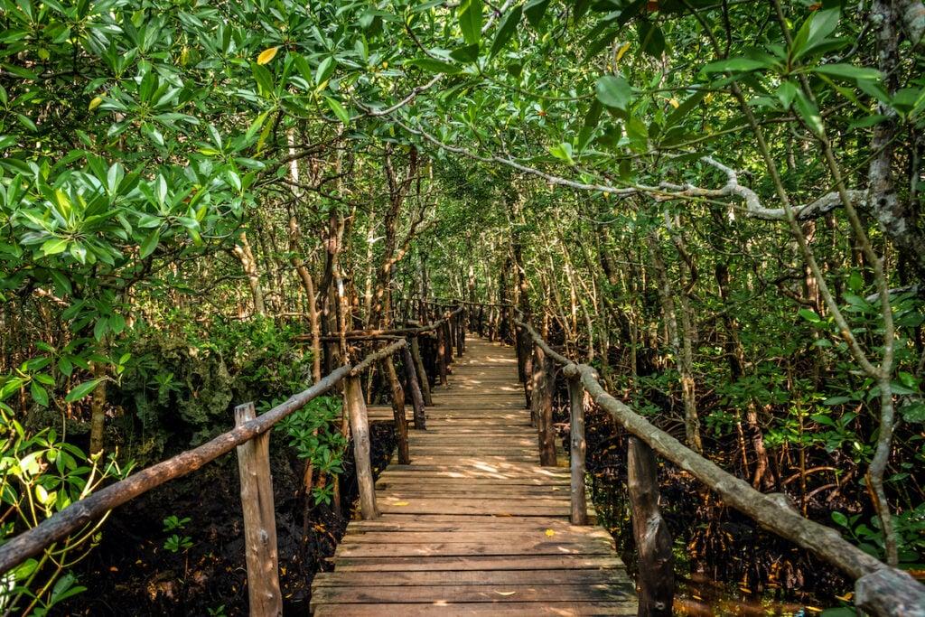 The Jozani Forest in Zanzibar.
