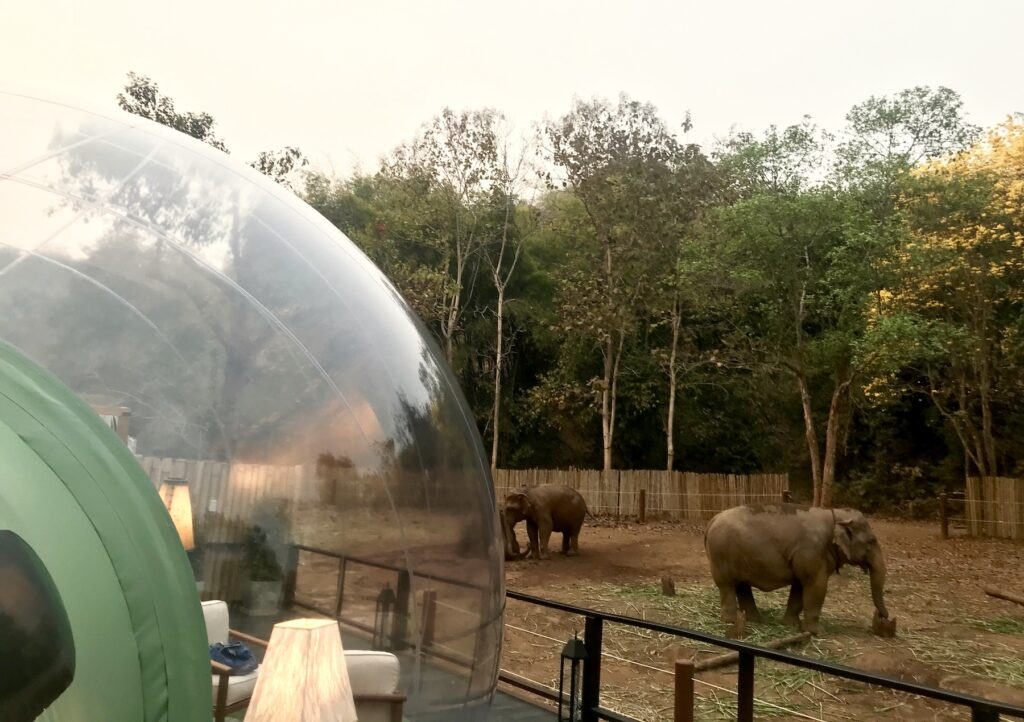 The jungle bubble and elephants in Thailand.