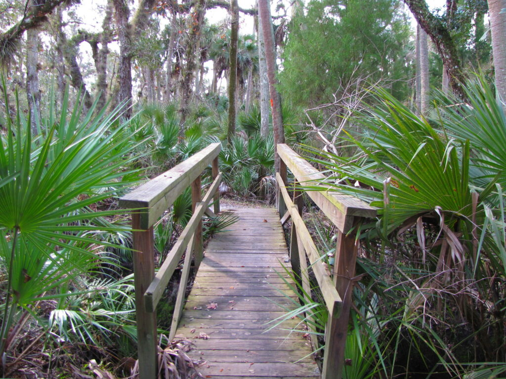 The Kolokee Trail in Florida's Little Big Econ State Forest.