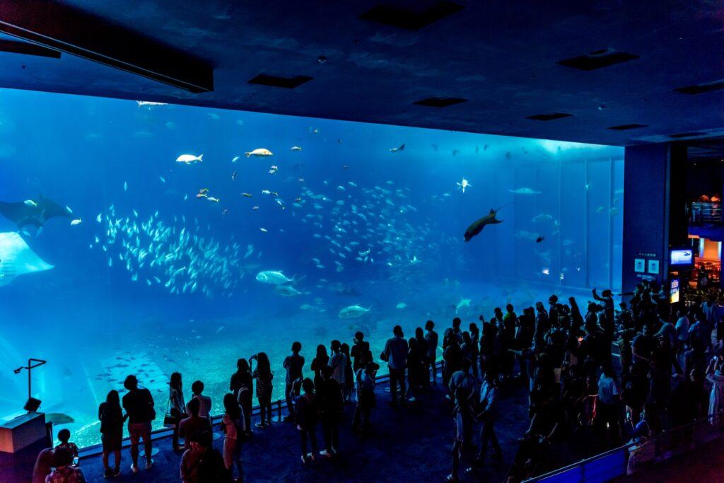The Kuroshio Sea in Churaumi Aquarium.