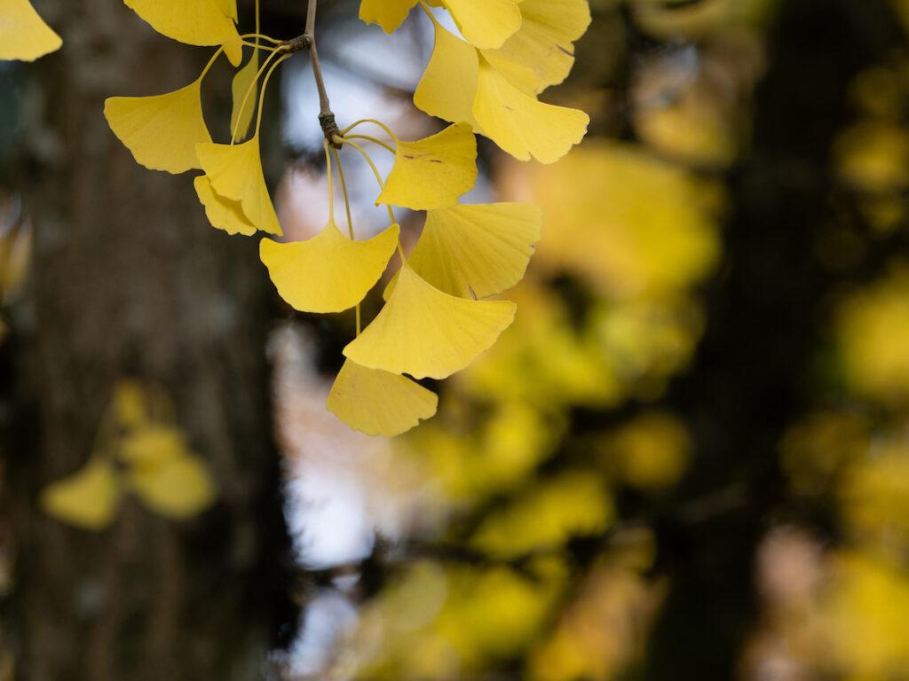 The Leach Botanical Garden in Portland, Oregon.